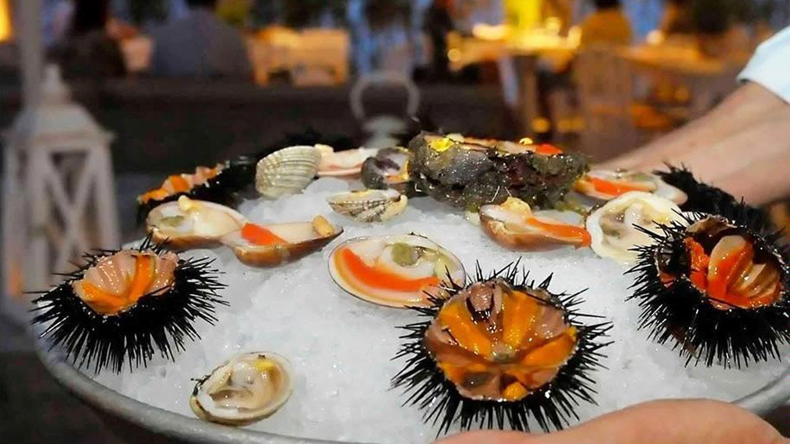 fresh-smooth-clams-cockles-oysters
